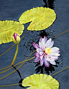 Water Reflections Originals - Purple Lily by John Lautermilch