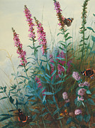 Blooms  Butterflies Painting Posters - Purple Loosestrife and Watermind Poster by Archibald Thorburn