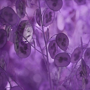 Pantone Posters - Purple Lunaria Poster by Bonnie Bruno