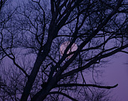 Tina A Stoffel - Purple Moon Set
