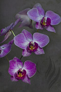 Purple Orchids Posters - Purple Orchid Flower Poster by Heiko Koehrer-Wagner