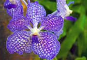 Dendrobium Photos - Purple Orchid by Matthew Bamberg