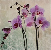 Marilyn Giannuzzi - Purple Orchids
