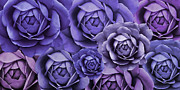 Dark Purple Prints - Purple Passion Cabbage Rose Flowers Print by Jennie Marie Schell