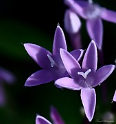 Florida Florals Photos - Purple Passion by Debra Forand