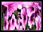 Avant Garde Photograph Acrylic Prints - Purple Petunias Abstract Acrylic Print by Rose Santuci-Sofranko