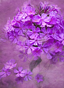 Phlox Digital Art Framed Prints - Purple Phlox Framed Print by Lena Auxier
