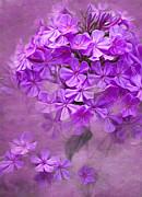 Purple Phlox Print by Lena Auxier