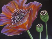 Pods Painting Framed Prints - Purple Poppy Framed Print by Beverly Livingstone