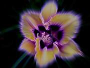 Purple Radiance Print by Shirley Sirois