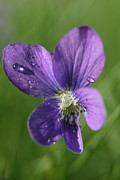 Flower Photos Photos - Purple Rain  by Neal  Eslinger