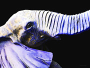 Buy Art Online Acrylic Prints - Purple Rein - Vibrant Elephant Head Shot Art Acrylic Print by Sharon Cummings