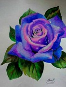 Christopher Kyle Art - Purple Rose by Christopher Kyle