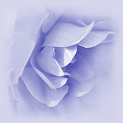 Soft Purple Posters - Purple Rose Flower Tranquillity Poster by Jennie Marie Schell