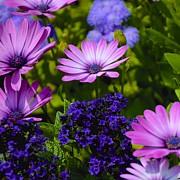 Corinne Rhode - Purple Shades