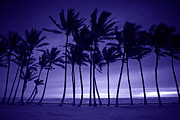 Beach Pyrography - Purple Silhouette of Tall Palm Trees  by Katrina Brown