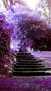 Tiffany Dawn Smith - Purple Steps at Bleak...