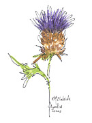Blue Bonnets Prints - Purple Thistle A Texas Wildflower Print by Kathleen McElwaine