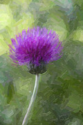 David Gleeson - Purple Thistle