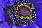 Tracy Hall Metal Prints - Purple Metal Print by Tracy  Hall