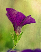 The Heavens Digital Art - Purple Wave Petunia by MaryJane Armstrong