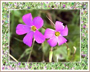 Art Product Mixed Media Prints - Purple Wildflowers - Side by Side photographic art Print by Ella Kaye
