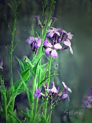 Zelma Hensel - Purple Wildflowers
