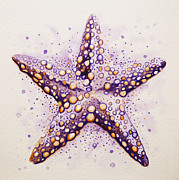 William Love - Purpura Starfish