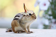 Chipmunk Photograph Posters - Put On Your Party Hat Poster by Peggy Collins