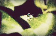Spider And Fly Prints - Putting on the Brakes Print by Melanie  Lankford Photography