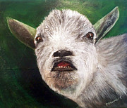 Goat Painting Originals - Pygmy Goat Smiling by Penny Stewart