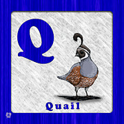 Abc Drawings - Q for Quail by Jason Meents
