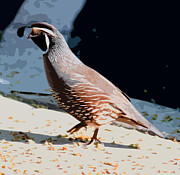 Wildlife Pyrography Posters - Quail Poster by AJ Williamson
