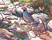 California Quail Paintings - Quail Family by Nadi Spencer