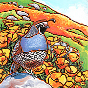 California Quail Paintings - Quail Poppies by Nadi Spencer