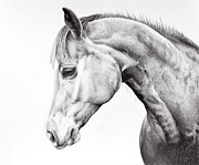 Quarter Horse Drawings Framed Prints - Quarter Horse Drawing Framed Print by Karen Broemmelsick