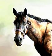 Quarter Horse Print by Karen Sheltrown