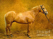 Will and Deni McIntyre - Quarter Horse