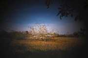 Randall Branham - Quarter Sawn Wood of Sycamore