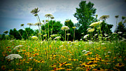 Appleton Art Art - Queen Annes Lace of the Butterfly Gardens of Wisconsin by Carol Toepke