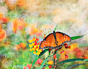 Jacksonville Art Framed Prints - Queen Butterfly in Pastel Framed Print by Paul Sisco