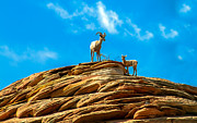 Bighorn Photos - Queen Ewe by Robert Bales
