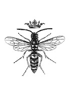 Danger Drawings Prints - Queen Wasp Print by Patrycja Polechonska