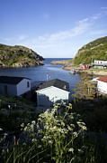 Rosemary Hawkins - Quidi Vidi Village in...