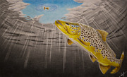 Brown Trout Metal Prints - Quiet Anticipation Metal Print by Nick Laferriere