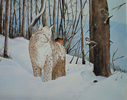 Bobcat Painting Prints - Quiet Forest Print by Harold Teel