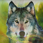 Wolf Digital Art Metal Prints - Quiet Majesty - Square Version Metal Print by John Robert Beck