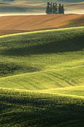 Harvest Art Prints - Quiet Morning In The Palouse  Print by Sandra Bronstein