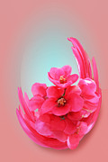 Quince Digital Art Prints - Quince Floral Abstract Print by Linda Phelps