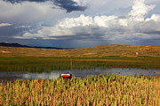 James Brunker Art - Quinoa on shore of Lake Titicaca by James Brunker